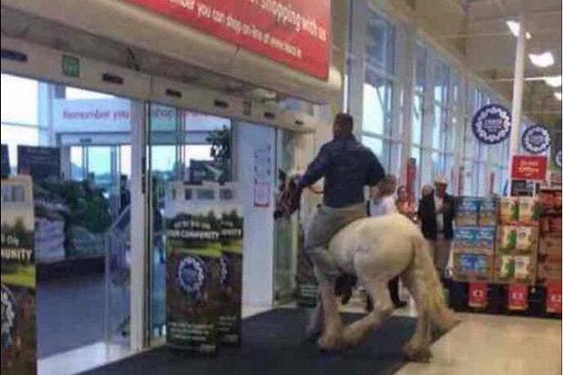 horse-tesco-468783